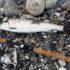 HAVØRREDFISKERI | Sådan kommer du godt fra start med fiskeriet